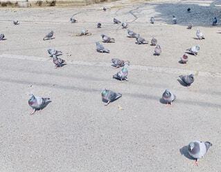 忍び寄る鳩の写真・画像素材[4374000]