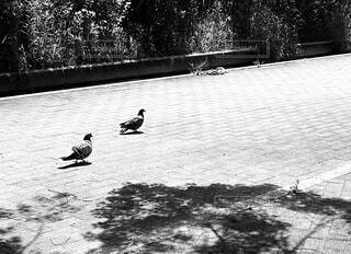鳩が2羽の写真・画像素材[4427018]