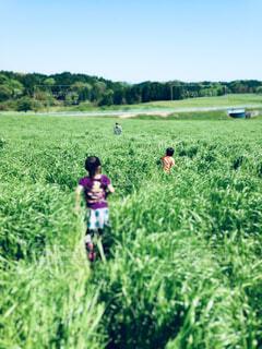 草原を駆ける子どもの写真・画像素材[4570043]