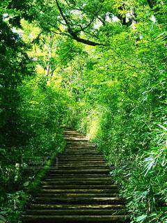 緑に囲まれた山道の階段の写真・画像素材[4321120]