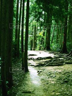 木々に囲まれた光の射し込む山道の写真・画像素材[4321121]