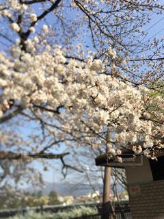 京都の春の写真・画像素材[4321908]