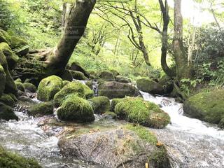 森の中の小川の写真・画像素材[4324364]