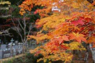 紅葉の季節の写真・画像素材[4323010]