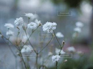 小さな白い花の写真・画像素材[4332129]