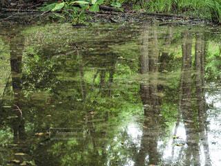 水たまりに映る緑の写真・画像素材[4342565]