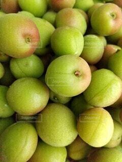 梅雨時期に収穫される小梅の写真・画像素材[4426003]