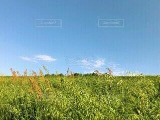 風吹く爽やかな「野原と青空」の写真・画像素材[4685009]