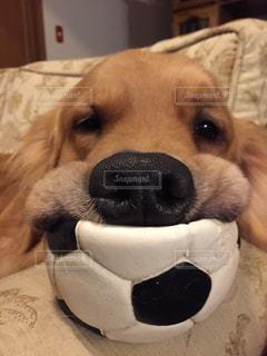 犬の写真・画像素材[219991]