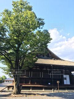 建物の前にツリーの写真・画像素材[720586]