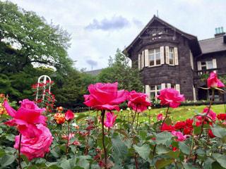 庭にピンクの花で一杯の花瓶の写真・画像素材[792920]