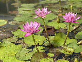 花の写真・画像素材[4399292]