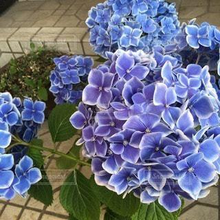 花の写真・画像素材[75055]