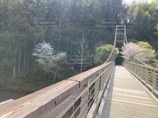 春の橋の写真・画像素材[4336876]