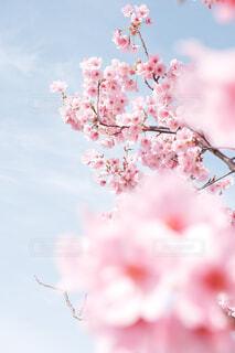 青とピンクの写真・画像素材[4368550]