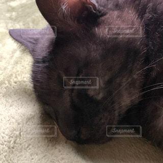 眠っている黒猫の写真・画像素材[4335039]
