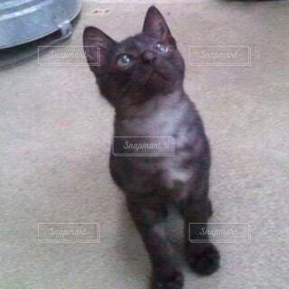 保護して間もないうちの猫の写真・画像素材[4335105]