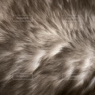 猫の毛並みの写真・画像素材[4337197]