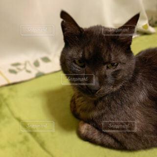 雷雨で憂鬱な黒猫さんの写真・画像素材[4376666]