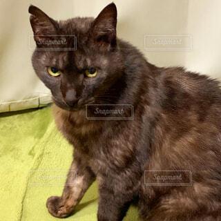 カメラ目線をくれた黒猫さんの写真・画像素材[4395181]