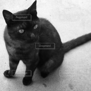 白黒加工した黒猫さんの写真・画像素材[4412733]