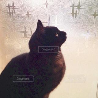 窓の前に座る黒猫さんの写真・画像素材[4555799]