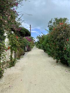 花の道の写真・画像素材[4338033]