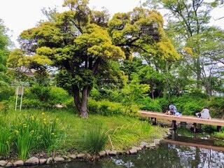 公園の風景の写真・画像素材[4397481]