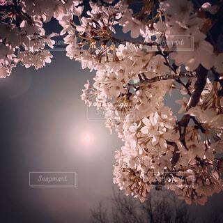花のクローズアップの写真・画像素材[4337360]