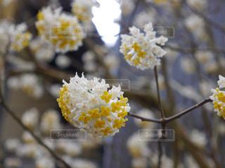 花の写真・画像素材[184421]