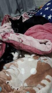 ベッドに横たわる猫の写真・画像素材[4337686]