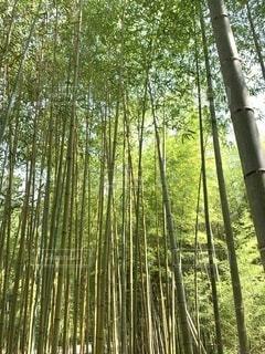 竹林から見上げた風景の写真・画像素材[4672903]