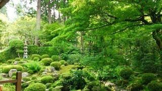 お庭の写真・画像素材[4391641]
