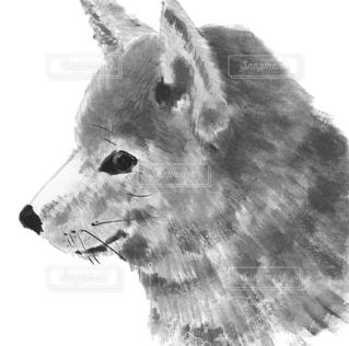 No.531923 犬