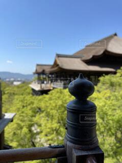 清水寺の写真・画像素材[4343484]
