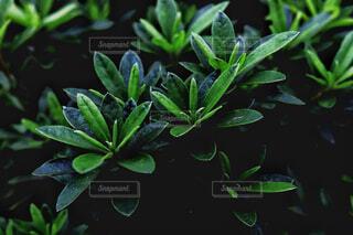深緑の写真・画像素材[4344117]