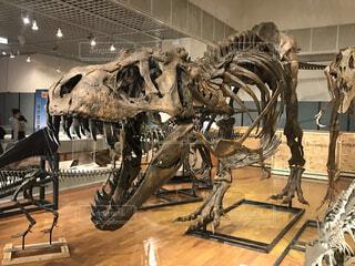 ティラノサウルス全身骨格の写真・画像素材[4351602]