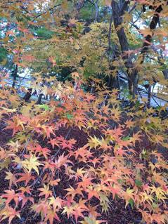 秋の写真・画像素材[620531]