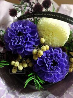 花の写真・画像素材[620719]