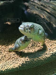 水族館の写真・画像素材[620747]