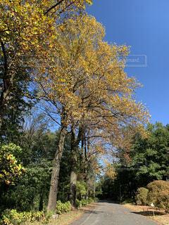 晴天の森の写真・画像素材[4355059]