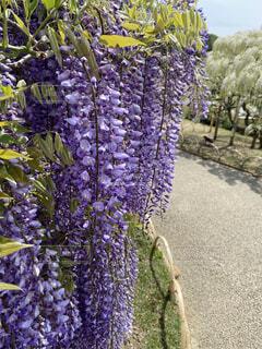 クローズアップした紫のお花の写真・画像素材[4358904]