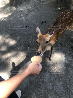 鹿の写真・画像素材[1398369]