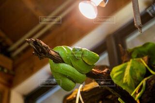 テーブルの上に座っているカエルの写真・画像素材[4501004]
