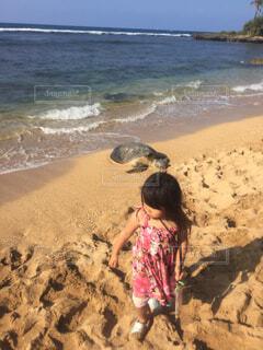 HAWAIIカイルアでウミガメと遭遇の写真・画像素材[4400812]