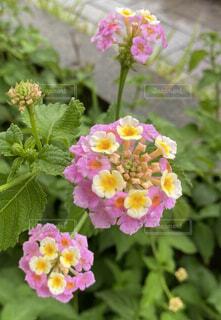 道端の小花の写真・画像素材[4440530]