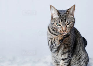 何かを思っこちらを見る猫の写真・画像素材[4358874]