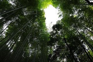 竹林の写真・画像素材[4359465]