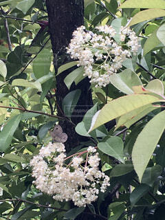 花のクローズアップの写真・画像素材[4399891]