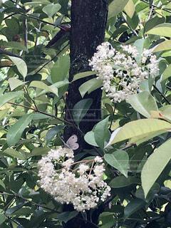 花のクローズアップの写真・画像素材[4399887]